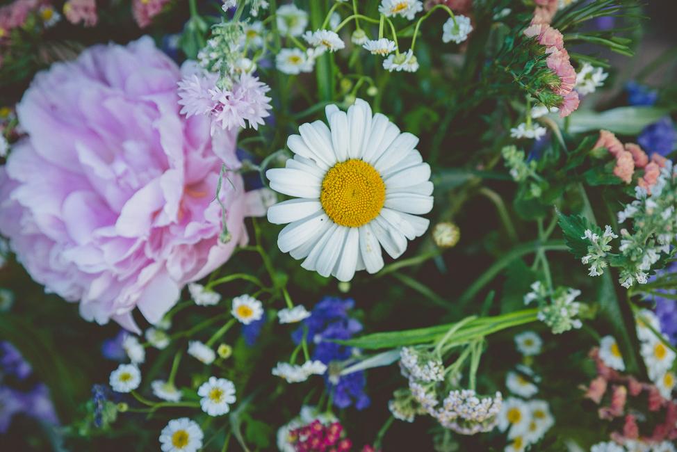 Wild flower detail