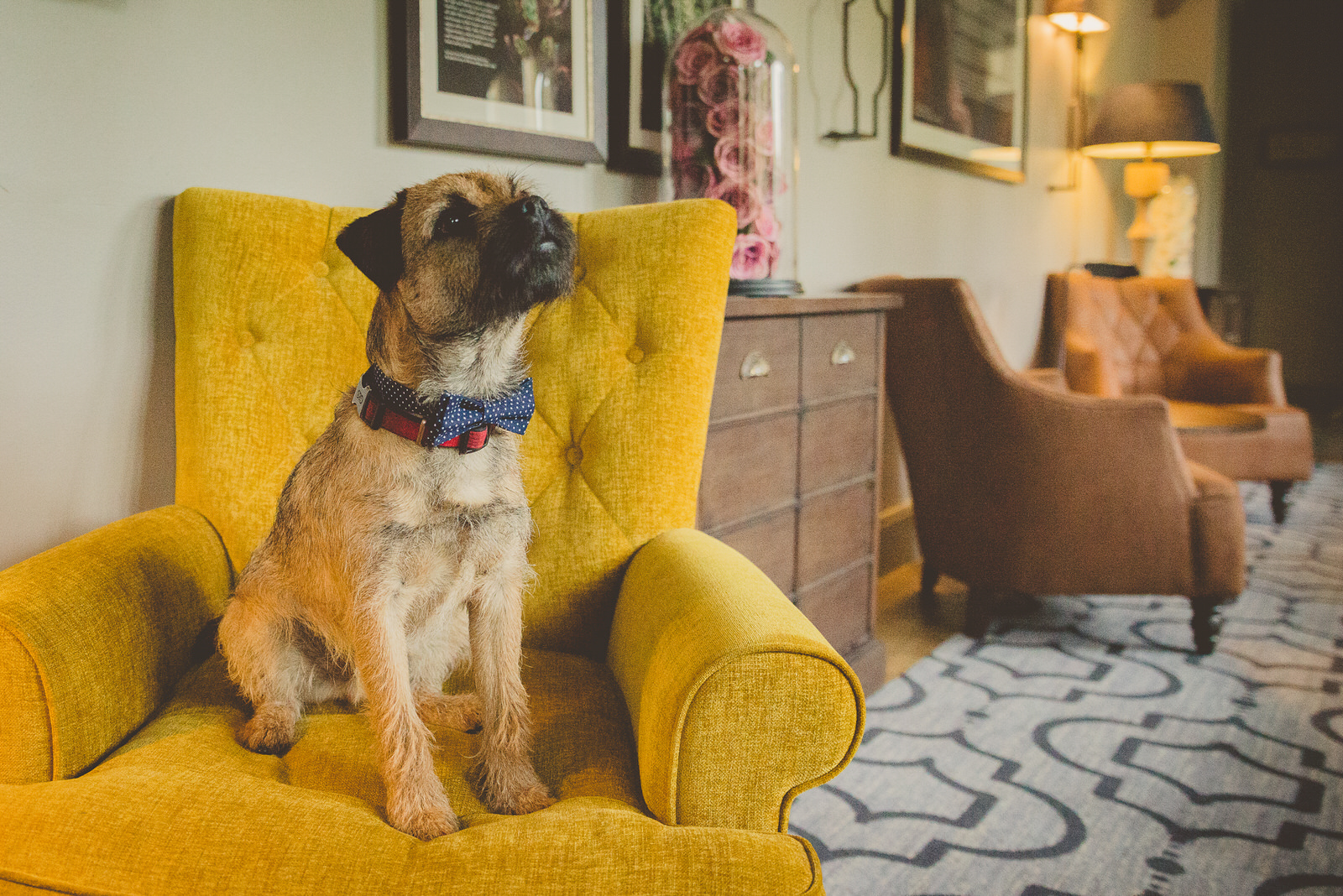 Dog sitting on yellow chair